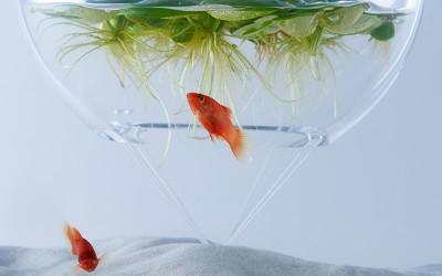 反覆嘗試後摸索出來的「極小生態」。一探「waterscape」作品背後蘊藏的想法。訪談對象:三澤遙(日本設計中心,三澤設計研究室室長)