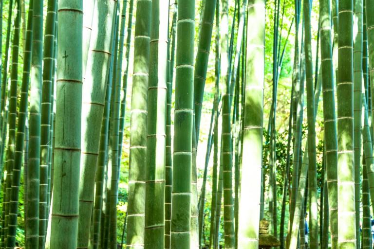 自然の竹を使った軽く・強靭な「バンブーバイク」はアフリカの命と生活を繋ぐ